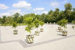 Königlicher Garten Zitronenbäume Stockbild