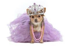 Königlicher Hund mit Krone stockfotos