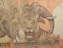 Königliches Bengal-Tiger- und -elefantbild auf 10 Rupien Anmerkung Stockbilder