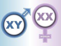Könsbestämma kromosomtecken Arkivbild