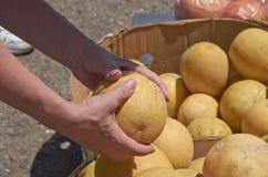 Köp av en melon Royaltyfri Foto