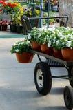 Köpande växter i en barnkammare Royaltyfria Bilder