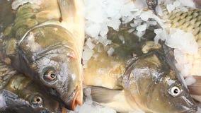 Köpfe der frischen Fische - noch lebendig stock video footage