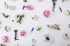 Köpfe des Pastells, Frühlingsblumen Stockbild