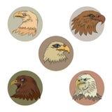 Köpfe von Adlern Stockbilder