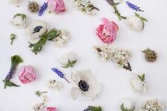 Köpfe von Frühlingsblumen Stockfotos