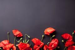 Köpfe von roten Mohnblumen auf schwarzer Hintergrundebenenlage Stockbilder