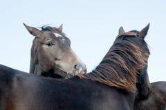 Köpfe von zwei Pferden Stockfotos
