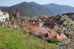 Köping av Weissenkirchen-isom omges med terrasserade vingårdar Wachau-dal lägre Aust Arkivbild