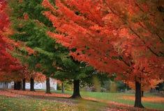 Kör vägen förbi färgrika träd Arkivfoton