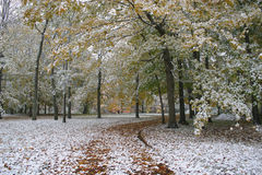 kör vintern Royaltyfria Bilder