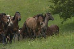 köra för hästar Royaltyfri Foto