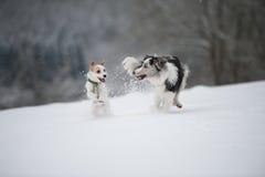 köra för hundar royaltyfria foton