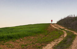 Köra för man som är stigande till och med grönt sädes- fält Royaltyfria Bilder