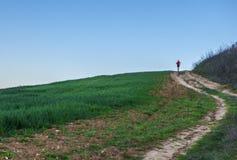 Köra för man som är stigande till och med grönt sädes- fält Royaltyfria Foton