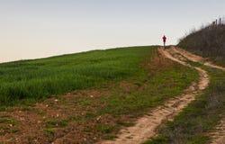Köra för man som är stigande till och med grönt sädes- fält Arkivbilder