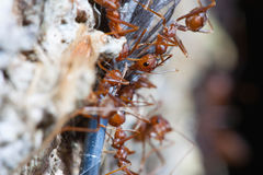 Köra för myror arkivbild