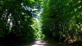 Köra på landsvägen till och med grön skog, Polen lager videofilmer