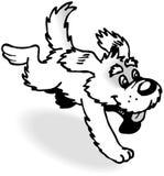 körande white för svart hund royaltyfri bild