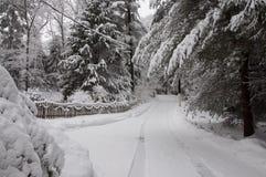 Körbana och träd som täckas i snö Royaltyfri Bild