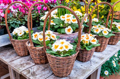 Körbe mit Blumen Stockfotos