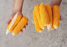 Körner in den Landwirt-Händen Stockfotos