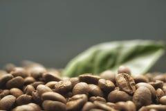 Körner des Kaffees auf einem dunklen Hintergrund Stockbild