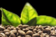 Körner des Kaffees auf einem dunklen Hintergrund Stockfotos