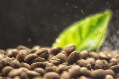 Körner des Kaffees auf einem dunklen Hintergrund Stockbilder