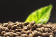 Körner des Kaffees auf einem dunklen Hintergrund Stockfotografie