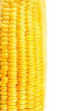 Körner des reifen Mais Lizenzfreies Stockfoto
