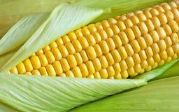 Körner des reifen Mais in einem Ohr stockbilder