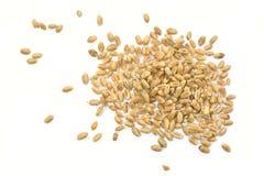 Körner des Weizens Stockfotos