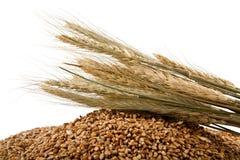 Körner des Weizens Stockfotografie
