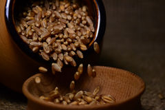 Körner des Weizens Lizenzfreie Stockbilder