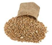 Körner des Weizens in einem Sack Stockfoto