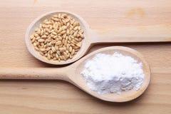 Körner des Weizens und des Mehls Lizenzfreies Stockbild