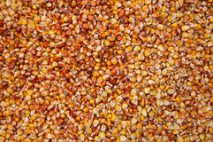 Körner von Mais Stockfoto
