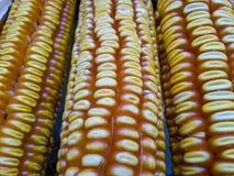 Körner von Mais mit Wassertröpfchennahaufnahme Stockfoto
