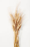 Körner von Weizen topview Lizenzfreie Stockfotografie