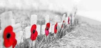 KÖRNIGES Schwarzweiss MIT ROTE MOHNBLUMEN-SELEKTIVEM FOKUS - Erinnerungs-Tagesmohnblumen auf hölzernen Kreuzen, auf eisigem Gras lizenzfreies stockfoto