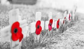 KÖRNIGES Schwarzweiss MIT ROTEN MOHNBLUMEN - Erinnerungs-Tagesmohnblumen auf hölzernen Kreuzen, auf eisigem Gras stockbilder