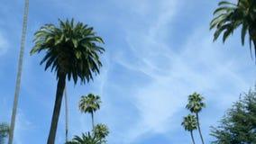 Körning av förgångna rader av palmträd