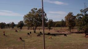 Körning förbi en lantgård i Oklahoma - härlig bygd lager videofilmer
