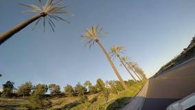 Körning förbi palmträd på solnedgången