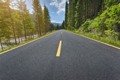 Körning på den alpina asfaltvägen till och med skogen Arkivbilder