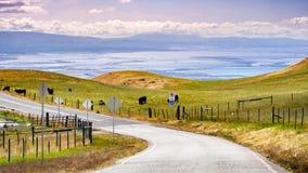 Körning på kullarna av södra San Francisco Bay område; nötkreaturflock som betar på de gröna ängarna; San Jose Kalifornien fotografering för bildbyråer