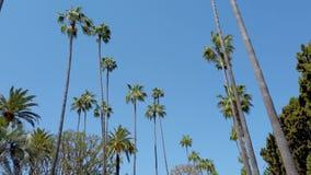 Körning till och med Beverly Hills med dess palmträd - loppfotografi arkivfilmer