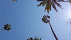 Körning till och med Beverly Hills med dess palmträd - loppfotografi lager videofilmer