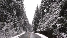Körning till och med dolda träd för snö i ultrarapid arkivfilmer